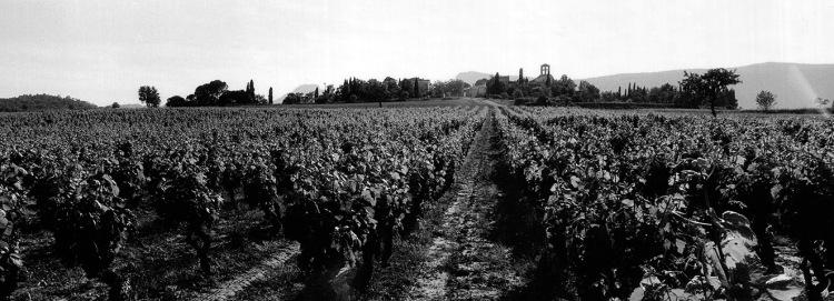 Pic-Saint-Loup. Photographe indépendant à Béziers