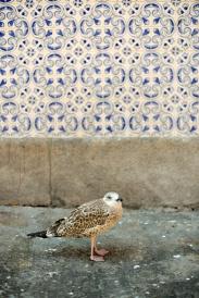 Porto © Daniel Mielniczek